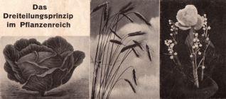 DgM006 Naturelle PrimärPflanze