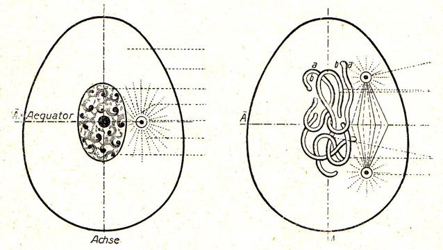 DgM 016 Zelle 1-2