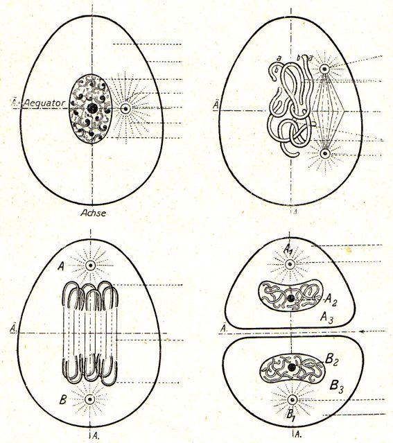 DgM 016 Zelle 1-4