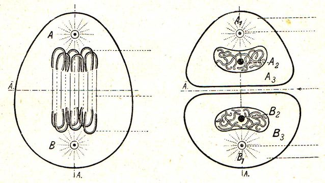 DgM 016 Zelle 3-4