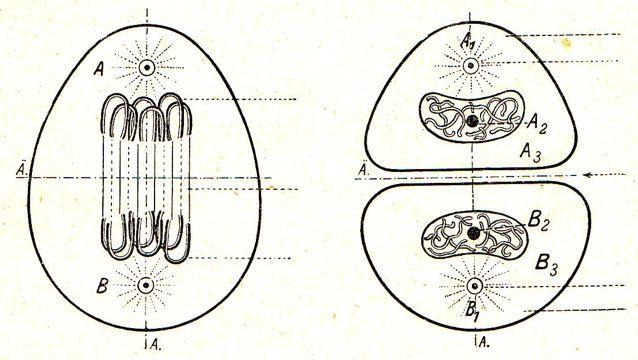 DgM 016 Zelle3-4