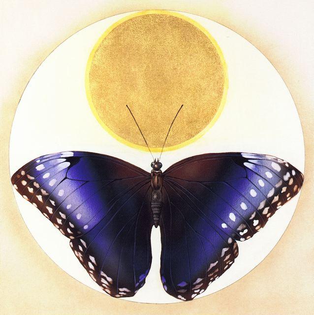 DgM 025 GS Kaphammel Schmetterlingblue