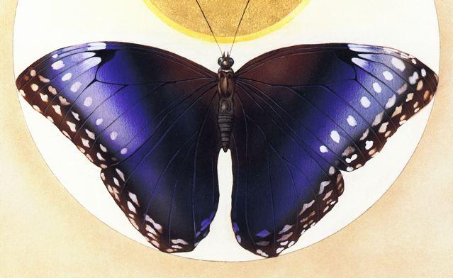 DgM 025 SchmetterlingKaphammel