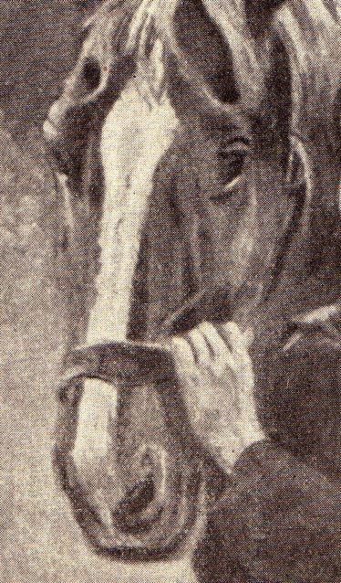 dgm046-pferd-nase