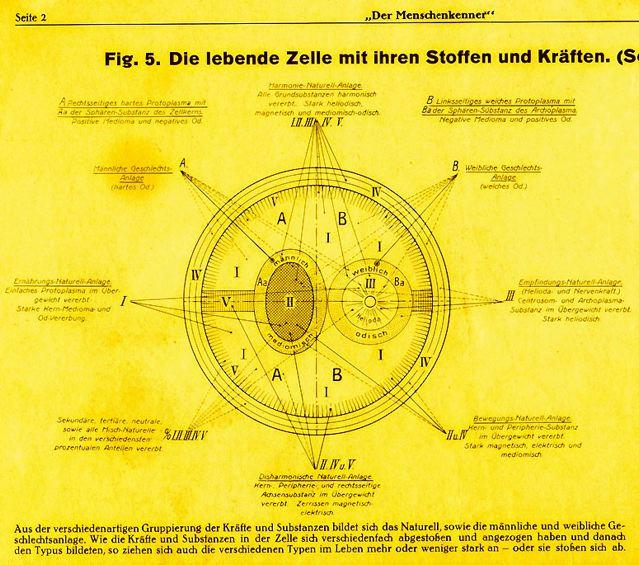 dgm007-1933zellneo-gelb