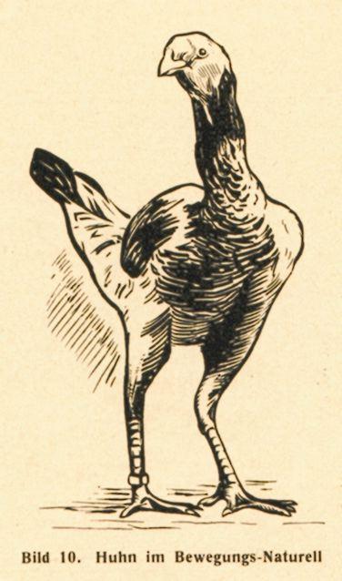 dgm060-1938huhnbe
