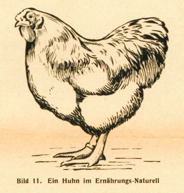 dgm060-1938huhner