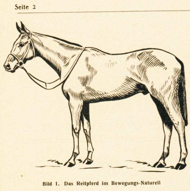 dgm060-1938pferdbe