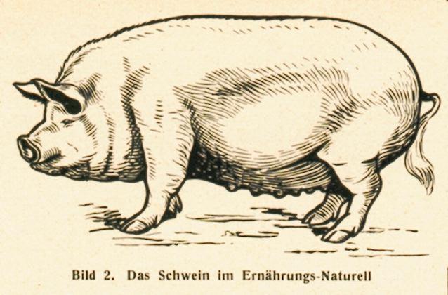 dgm060-1938schweiner