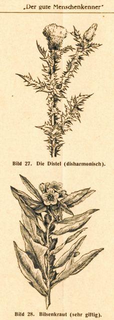 DgM065-1938DistelDi