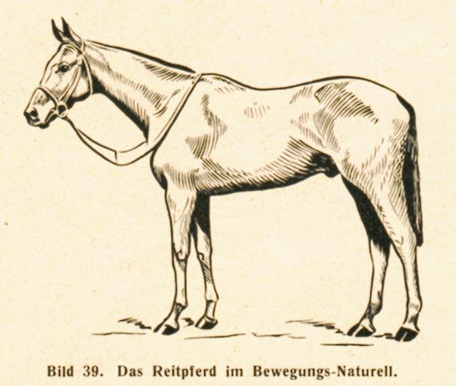 DgM065-1938TierBew
