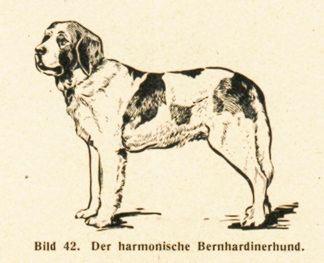 DgM065-1938TierHarm