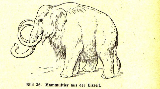 DgM065 Bi36 Mammut mT